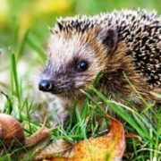Little snail and hedgehog