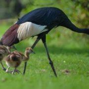Lovely cranes