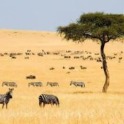 Magnificent Kenya