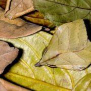 Moth on leaves