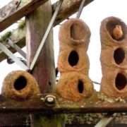 Rufous hornero's nest