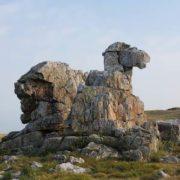 Sacred Mountain - Camel