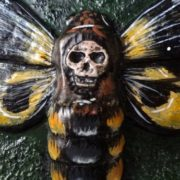 Stunning Death's-head hawkmoth