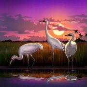 Whooping Cranes Sunset Digital Art