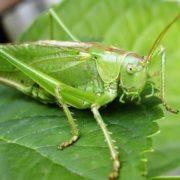 Wonderful grasshopper