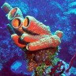 Sponge – Plant or Animal?