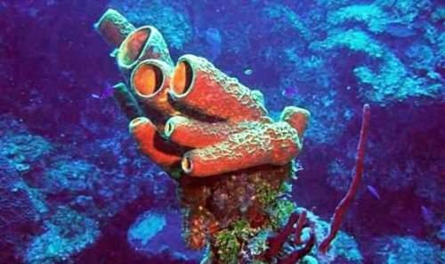 Sponge - Plant or Animal?