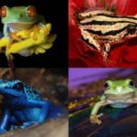 Amazing and Wonderful Frogs