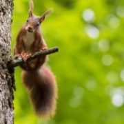 Amazing squirrel