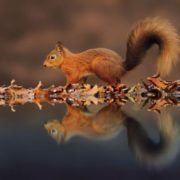 Attractive squirrel