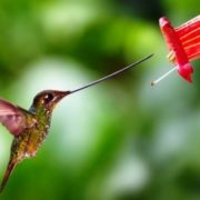 Awesome hummingbird