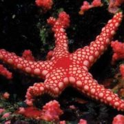 Awesome starfish