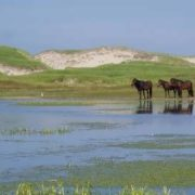 Beautiful Sable Island