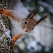 Beautiful squirrel
