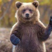 Charming bear