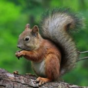 Charming squirrel