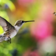 Cute hummingbird