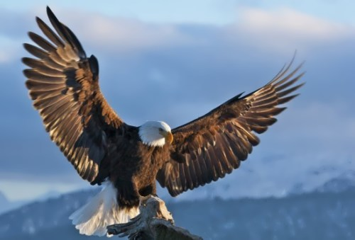 Eagle – Riders of the Wind