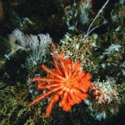 Gorgeous starfish