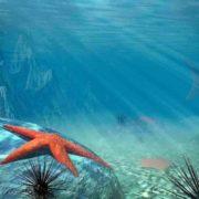 Interesting starfish