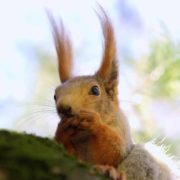 Lovely squirrel