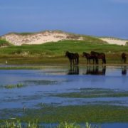 Picturesque Sable Island