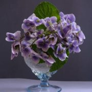 Pretty violets