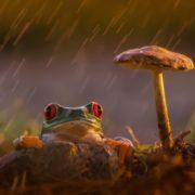 Rain and light