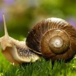 Snail – interesting mollusk