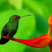Stunning hummingbird