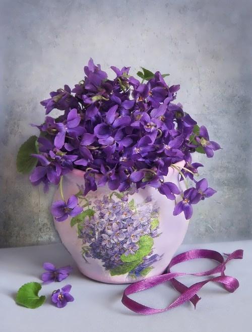 Violet - delicate flower