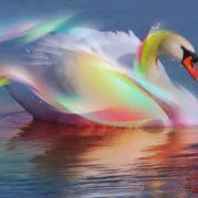 Amazing swan