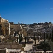 Archaeological park. Above is the Mount of Olives