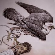 Attractive falcon