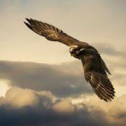 Awesome falcon