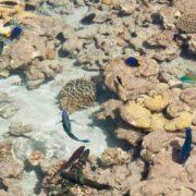 Coral beach in Eilat