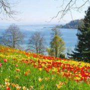 Mainau - flowering island