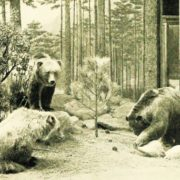 Mexican Grizzly Bear officially recognized extinct in 1964