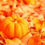 Pumpkin – interesting fruit