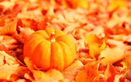 Pumpkin – interesting fruit
