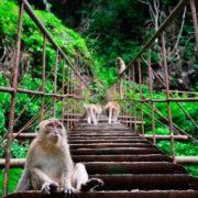Sirinat National Park