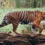 Extinct animals – silent reproach to mankind