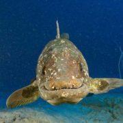 Wonderful coelacanth
