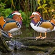 Awesome ducks