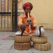 Graceful cobras