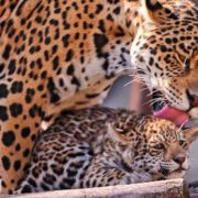 Loving mother and her baby