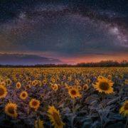 StarFlowers. Photo author Kristian Mladenov
