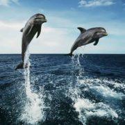 Amazing dolphins