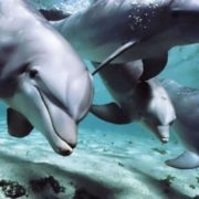 Awesome dolphins