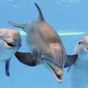 Charming dolphins